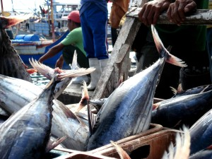 Skipjack tuna harvested in the Philippines