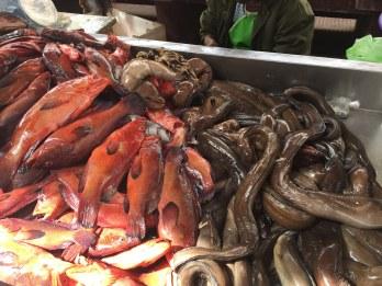 grouper_eel